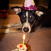 Birthday Girl<br /> Sat. January 26, 2013 (day 264)<br /> <br /> Patches is 1-year old today.  Happy birthday, silly girl.  We love you.