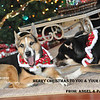 Merry Christmas<br /> Tue. Dec 25, 2012 (day 251)<br /> <br /> Wishing you the best holidays ever!  - The Boese Family