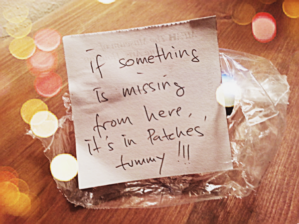 A Note to My Husband<br /> Wed. February 20, 2013 (day 272)<br /> <br /> Patches found something that she can chew.  She ripped the plastic bag and ran away with it.  <br /> I didn't know what else in that plastic, so I left a note to my husband...  he'll figure it out.