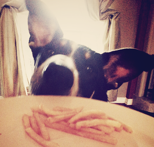 Can I Have Some?<br /> Wed. July 3, 2013 (day 329)<br /> <br /> Patches was eyeing my french fries...