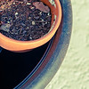 Potting Mix in The Pot<br /> Tue. April 24, 2012 (day 150)<br /> <br /> Day 150!!! I finally caught up with my Daily's.... <br /> OK- All the plants were already planted, now let's try to get back to normal again.