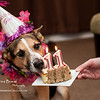 Celebrating Angel's 11th Birthday<br /> Mon. April 15, 2013 (day 286)<br /> <br /> Happy birthday my sweet puppy!