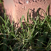 Brick and Grass<br /> Wed. April 11, 2012 (day 137)<br /> <br /> I just love being outdoor...