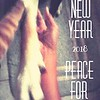 Day 1 - Happy New Year! <br /> Sun. December 31, 2017