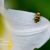 A Day in The Garden<br /> Wed. May 12, 2010 (Day 352)<br /> <br /> I was enjoying my late blooming Easter lilies when I spot this little guy...<br /> of course, with my macro.