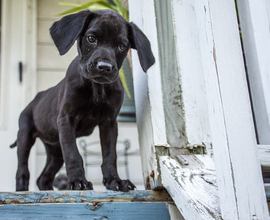 "My Dog ""Bruin Bella"""