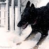 Annie Snow pics March 11th