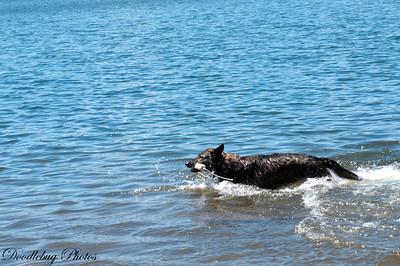 Dexe Swimming June 17 2014