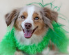 St. Patrick's Day 2010.  Tiki was a willing model as long as the treats kept coming.  She was a good sport!