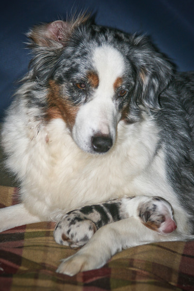Annie the proud Mommy with her baby girl on day one.