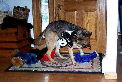 2005 - Stuffies are the customary Christmas present and Ari loved to play with them.  This year I missed the crazy running around he used to do.