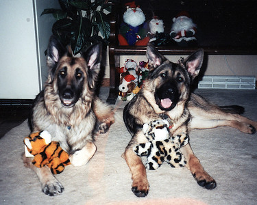 1999 - They love their stuffies and this Christmas stuff is new to Ari who is 6 months old.  Josephine is a bit over 8 years old.