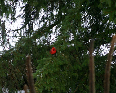 I felt like we were being watched by the cardinal in the tree and it made me think of Ari.