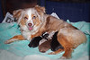Mom and pups.....<br /> Lulu, Skye, Gaby and Bella