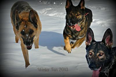 *** My Dogs (Annie - Ari - Dexe - Juss - Megan - Tee - Vince)