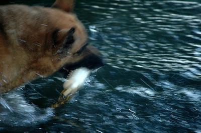 Tee Swimming 2011