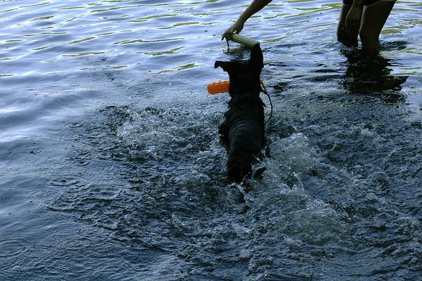 Swimming 2011