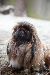 Tilly in the Snow She was wondering why the world had started to go white!