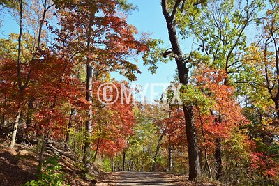 Fall In Love With Davey Dogwood Park