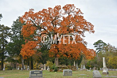 Fall In the Historic Palestine City Cemetery