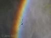 """""""Ovan regnågen"""" / """"Over the Rainbow"""""""