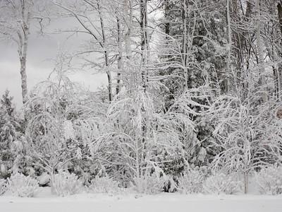 20091209_blizzard_011-7
