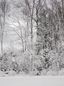 20091209_blizzard_011-9