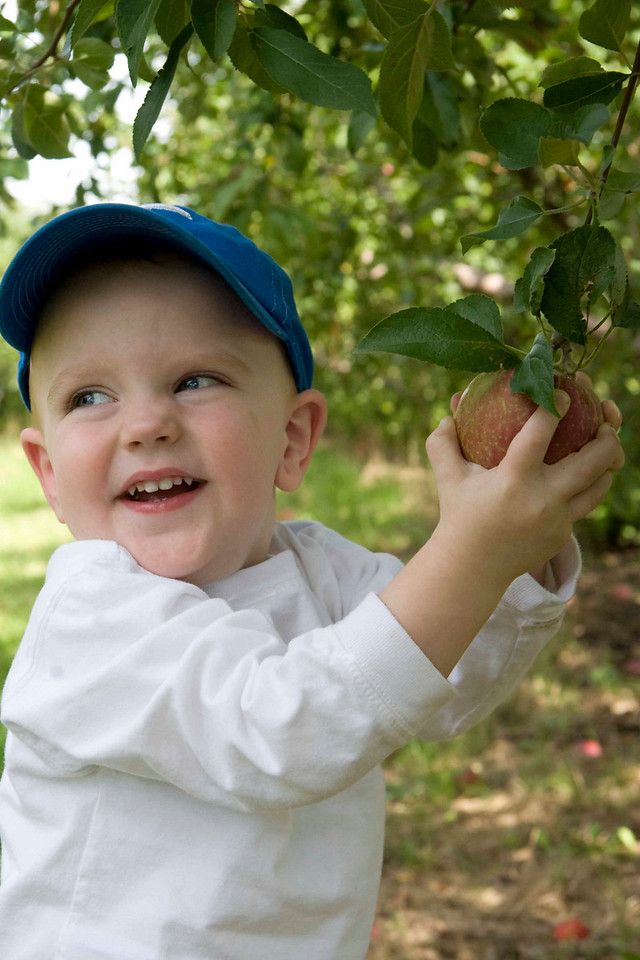 Here is Tristan picking his first apple.