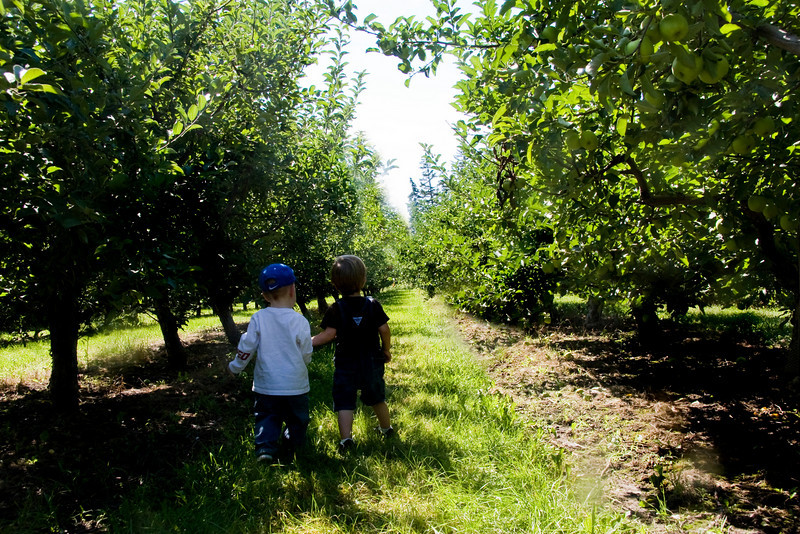 Walking through the orchard with my friend.