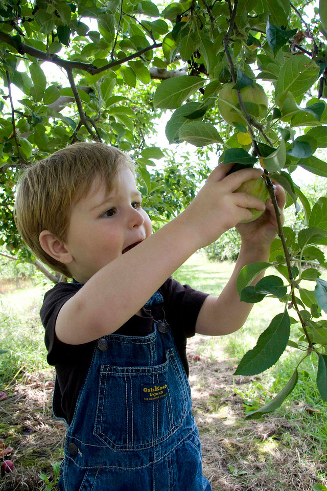 Here is me picking my very first apple!