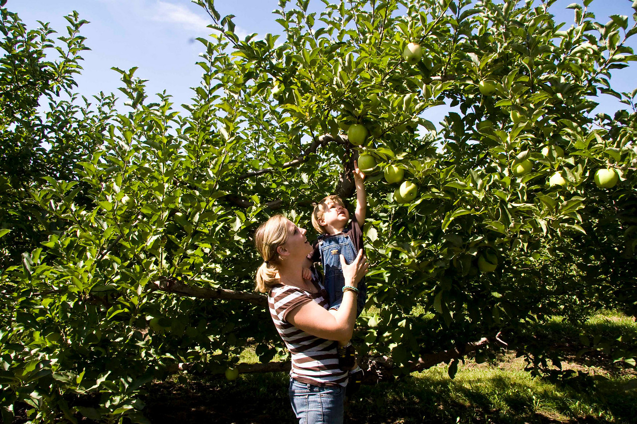 Mom had to give me a lift to reach the apples that were way up high.