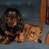 K-9 Kids Reilly & Rusty