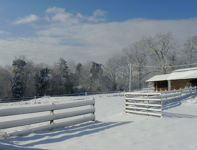 Snow March 2009