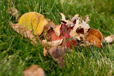 Autumn Photos in Our Yard