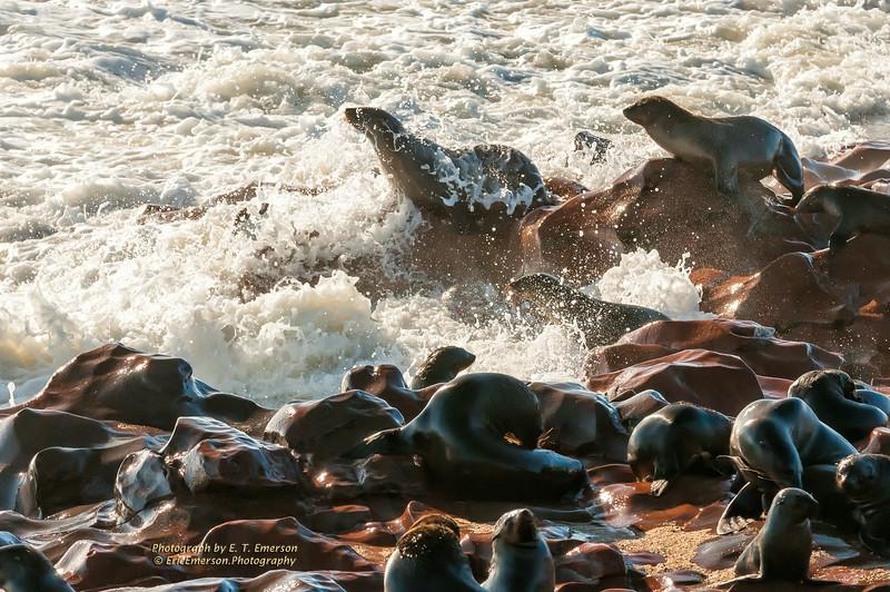 Cape Cross Seal Colony