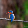 Kingfisher in South Africa