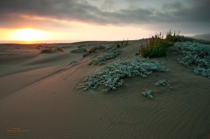 MacKerricher Dunes