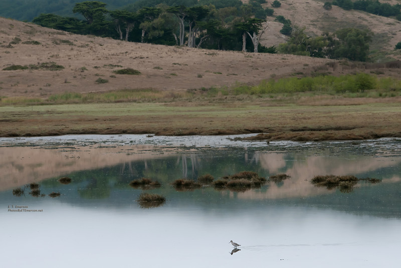 Point Reyes Backwaters
