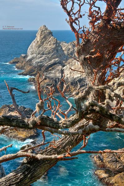 Point Lobos State Reserve Lichen