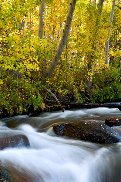 Mill Creek  in Fall