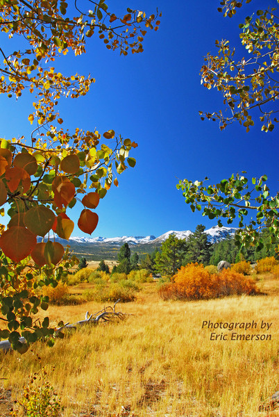 Fall Colors at Luther Pass
