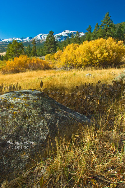 Luther Pass Grasses