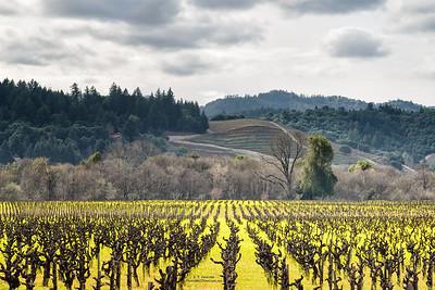 Northern Sonoma Co. Vineyard