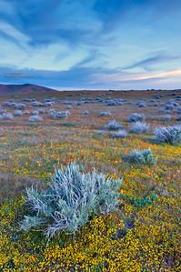 Early Morning at Antelope Poppy Preserve