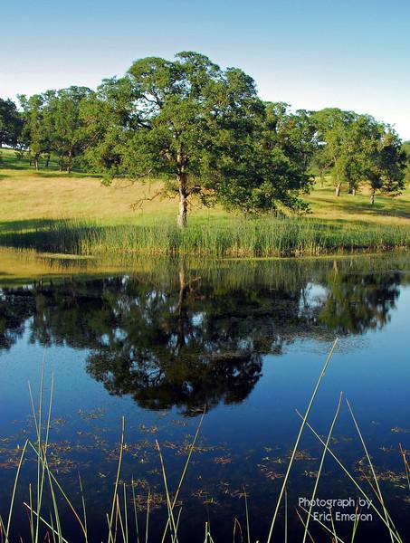 Deer Creek Pond