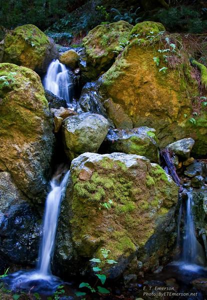 Along Mt. Tam's Steep Ravine Trail