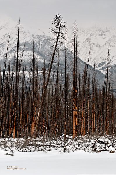 Wildhorse Creek Burn Area