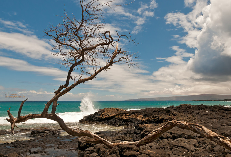 Maui's La Perouse Bay