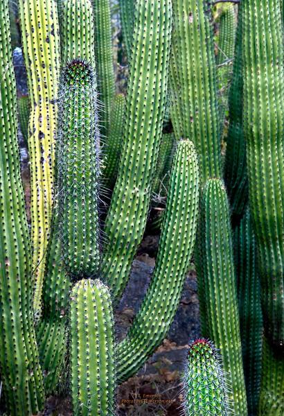 Cacti Near Waterfall