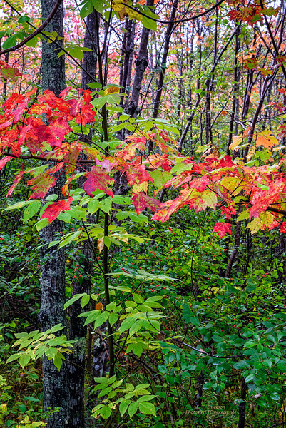Onset of Acadia NP Color
